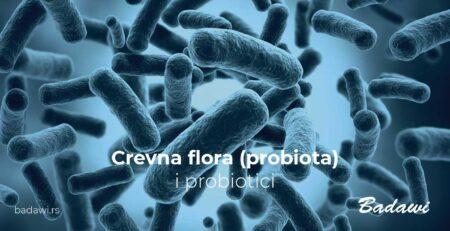 Crevna flora i probiotici